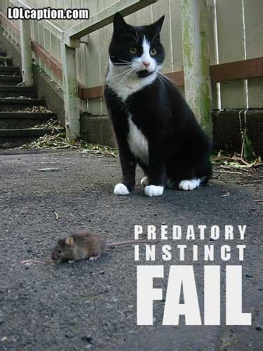 funny cat pictures  captions cat pictures