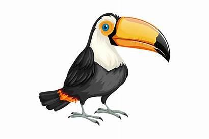 Toucan Transparent Clipart Pixabay Cartoon Burung Bird