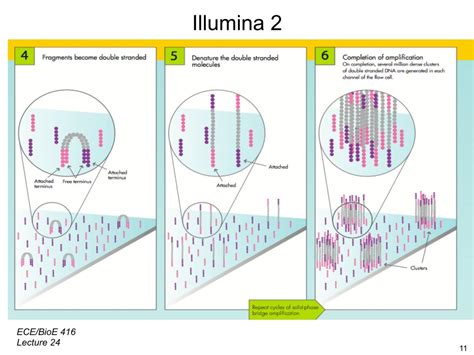 sequenziamento illumina nanohub org resources illinois ece 416 protein