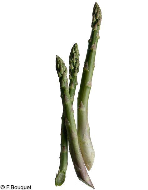 cuisine asperges vertes asperges vertes les produits cultes d 39 eric fréchon