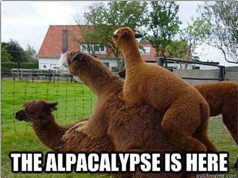 alpacalypse memes     nervous