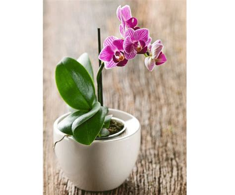 how to make orchids bloom how to make your orchids flower