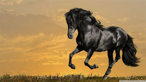 desktop horse wallpaper hd downloadwallpaperorg