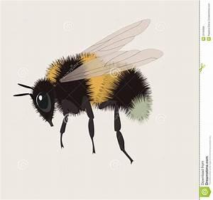 Realistic Bumblebee Illustration Stock Vector ...