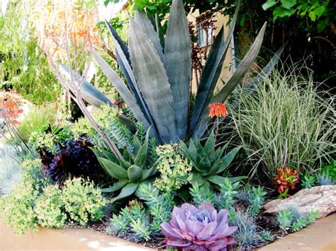 succulent garden bed succulent front garden outdoor spaces pinterest