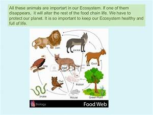 Herbivores Animals List