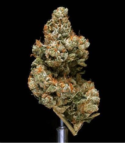 Cannabis Weed Platina Kush Gifs Yang Logam