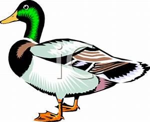 Mallard Duck Clipart | Clipart Panda - Free Clipart Images