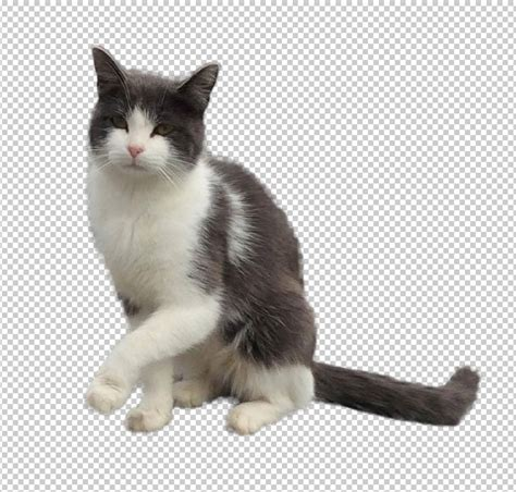 Image Without Background Cat Png Transparent Background Transparent Cat Transparent