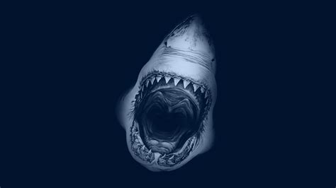 Shark Hd Wallpapers  Great Shark Fish Desktop Wallpapers