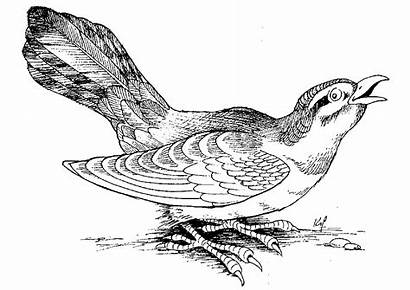 Birds Coloring Bird Pages Animaux Printable Coloriage