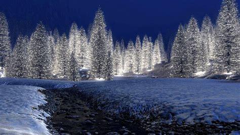 winter forest night wallpaper   wallpaper p hd