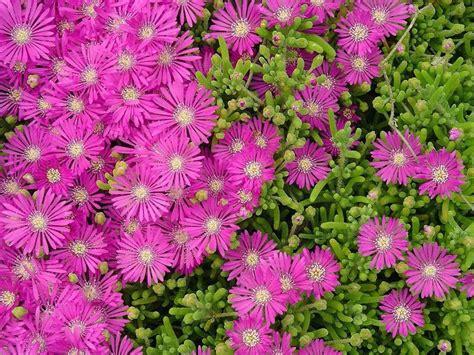 welche pflanzen gegen wespen bodendecker gegen unkraut welche pflanzen sind daf 252 r geeignet wasser bett