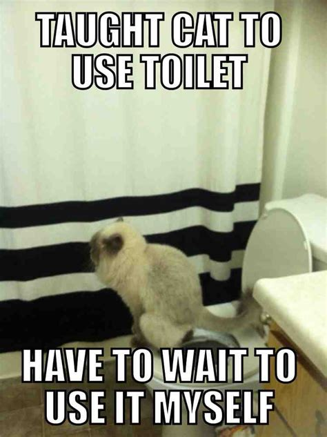 Funny Bathroom Memes - teaching a cat to use the toilet means waiting your turn in line for the bathroom