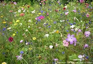 Buch Garten Anlegen : naturgarten anlegen wie entsteht der eigene wildgarten garten hausxxl garten hausxxl ~ Sanjose-hotels-ca.com Haus und Dekorationen