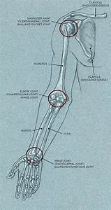 Joints And Joint Movement
