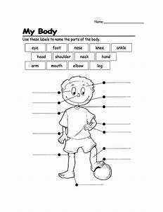 Resultado De Imagen De Parts Of The Body Exercises For