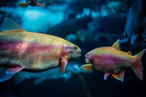 cuisine prairie conforama le grand aquarium de touraine 28 images les estivales
