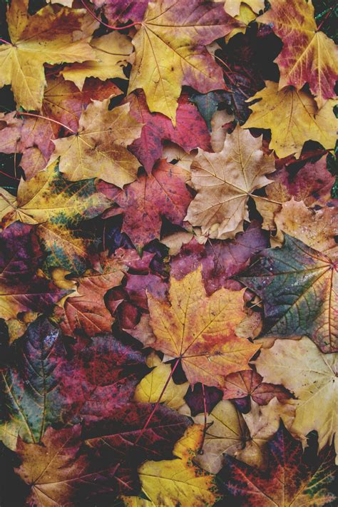 """You can also upload and share your favorite aesthetic phone wallpapers. lucajamesphotography: """"