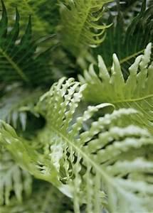 Warum Sind Pflanzen Grün : warum ist das gras gr n garten pflanzen news green24 hilfe pflege bilder ~ Markanthonyermac.com Haus und Dekorationen