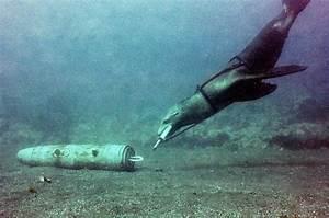 U.S. Navy Marine Mammal Program - San Diego, California ...