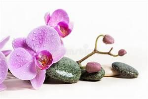 Bild Rosa Grau : orchideen und badekurortsteine auf einem wei en hintergrund sch ne rosa blumen auf einer ~ Frokenaadalensverden.com Haus und Dekorationen