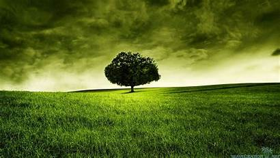 Tree Backgrounds Cool Wallpapers Rural Scene 1080