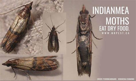 moths    home  pest control