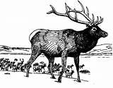 Coloring Elk Colornimbus Letter Iguana Moose sketch template