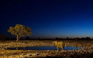 Sahara Night Light Wallpaper - HD Wallpapers