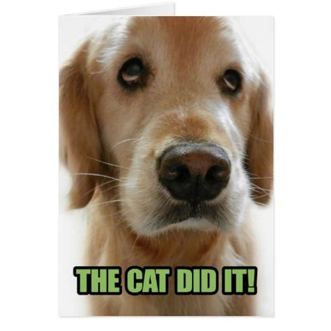 Golden Retriever Meme - funny golden retriever memes www imgkid com the image kid has it