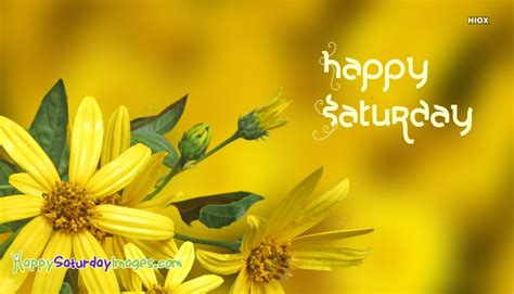 happy saturday images  yellow flowers
