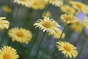 Pflanzen Im Mai : blumen im mai foto bild pflanzen pilze flechten bl ten kleinpflanzen gartenpflanzen ~ Buech-reservation.com Haus und Dekorationen