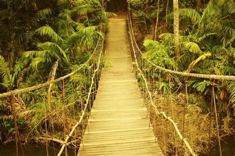 si鑒e suspendu ikea toile imprimée pont suspendu dans jungle toile photo eu