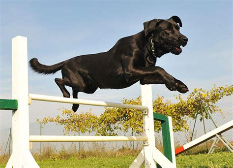 jump bar healthy pets animal planet
