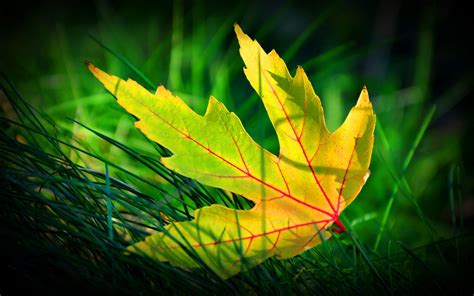 Abstract Green Leaf Wallpaper by Green Leaf Wallpapers Wallpaper Cave