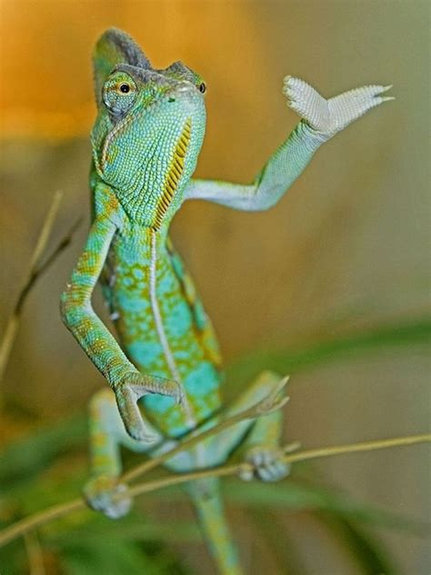 40 Pictures of Funny and Cool Animals