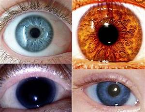 17 Best images about Eyes on Pinterest | Eye color ...