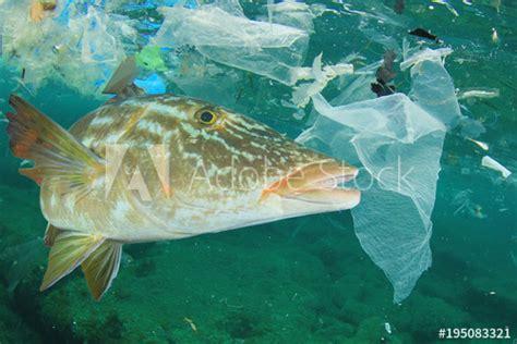 plastic ocean pollution  fish plastic bags dumped