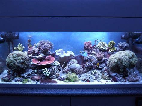aquarium eau de mer fish only 320 litres recifal