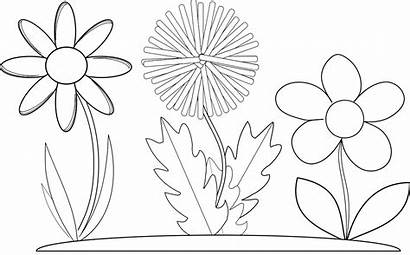 Coloring Pages Flowers Flower Printable Drawing Wildflowers