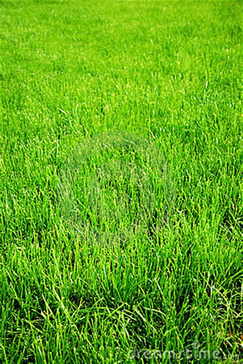 grass background stock photo image