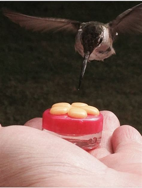 3 hum buttons mini hand held hummingbird feeders made