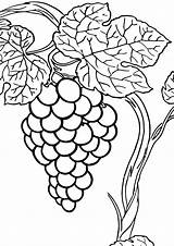 Grape Coloring Pages Print Coloringway sketch template