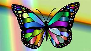 Colorful Butterflies Images - Reverse Search