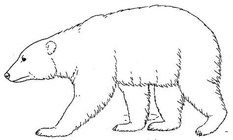 polar template all cliparts polar bears clipart