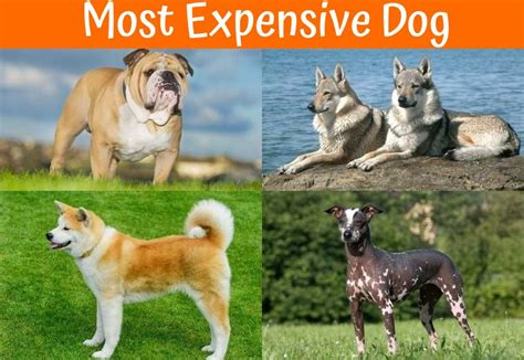 100 small non shedding dogs easy to train here are