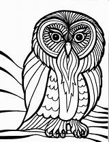 Coloring Bird Pages Owl sketch template
