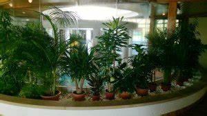 Welche Erde Für Palmen : palmenarten f r drinnen palmen f r winterg rten wohnung ~ Watch28wear.com Haus und Dekorationen