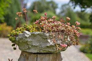 Pflanzen Für Raucher : klein aber fein die 7 besten pflanzen f r tr ge und mini steing rten garten ~ Markanthonyermac.com Haus und Dekorationen